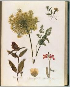 emilydickinson_herbarium8.jpg