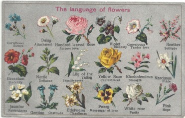 language-of-flowers-meaning.jpg